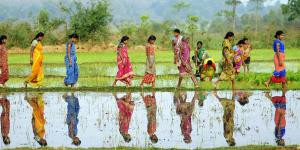 Women working in their rice paddy fields in Odisha, India