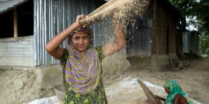 A woman processes rice in front of her house in Pukra, Habiganj district, Bangladesh