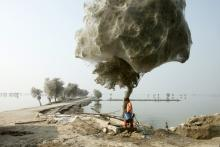 Trees cocooned in spiders webs after flooding in Sindh, Pakistan