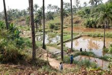 Community fish-farming ponds in the rural town of Masi Manimba, DRC